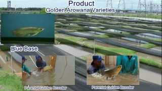 preview picture of video 'Arowana Ranch Corporate Profile Video Presentation (English)'