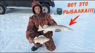 ШОК! ЩУКА НЕ ДАЁТ ОТДОХНУТЬ! Килограммовые ОКУНЯ! Рыбалка МЕЧТЫ в Кургальджинском Заповеднике!!!