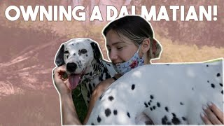 Life With 2 Dalmatians! *MUST WATCH*