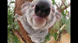 Подборка видео с животными 2015 ► Funny Animals Compilation 2015 ► Смешные приколы с животными