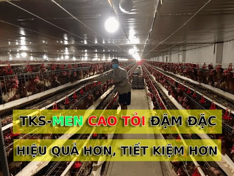 Hiệu quả thực tế của TKS-Men cao tỏi đậm đặc dùng cho trại gà đẻ