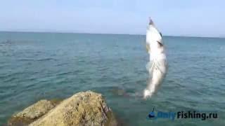 Со спиннингом на Кипр! - Самые лучшие видео