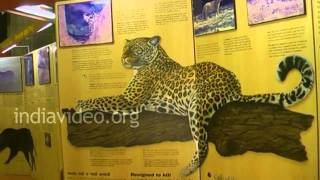 Museum at Sasan Gir National Park