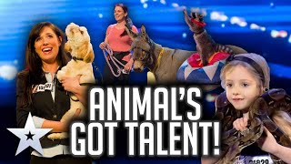 High-pitched pooches and drawing donkeys! ANIMALS GOT TALENT! | Britain's Got Talent