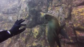 Playing with Sea Lions in the Sea of Cortez