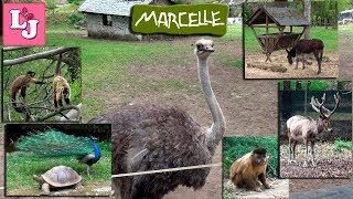 Zoo de Marcelle 2017 Испания Часть 2 В Зоопарке Marcelle Natureza Lugo
