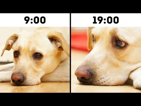 Estos Errores Que Podrían Acortar La Vida De Tu Mascota