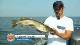 Рыбалка на рыбинском водохранилище места ловли