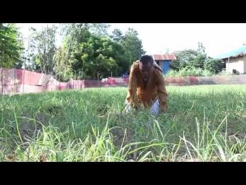 Mangayayat mabilis 1 kg bawat araw