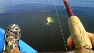 preview picture of video 'Pesca en Kayak Banderilludo (Pampano Africano) en Champoton. www.hotelsnookinnchampoton.com'