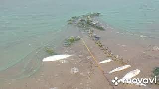 Рыбалка на озеро каспля смоленской области