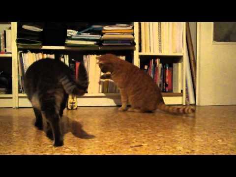 חתול נגד מטרונום