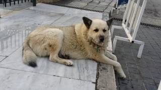 Stray Dogs and Cats of Greece - BIG COMPILATION VIDEO!