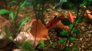 FISH IN MY AQUARIUM 4 (рыбки в моём аквариуме под Andre Fly - Inspiring Lounge Music 9) 1 HOUR