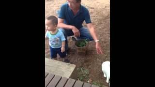 Feed rabbit