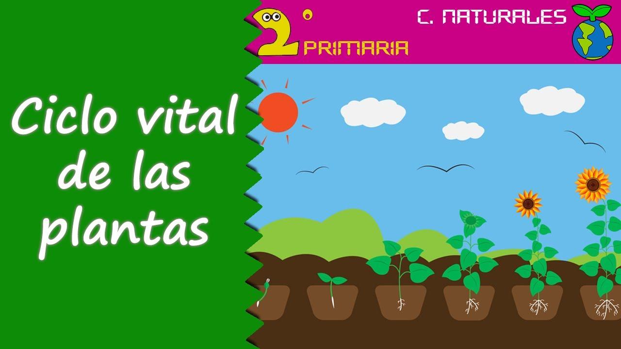 Ciencias de la Naturaleza. 2º Primaria. Tema 5. El ciclo de las plantas