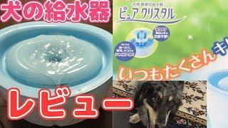 ピュアクリスタル!犬用の給水器が凄すぎた・・・【ミックス犬くう】Mixed Breed Dogs Qoo