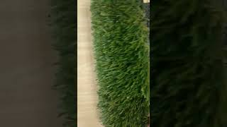 How to judge the coating of artificial carpet is good or not?