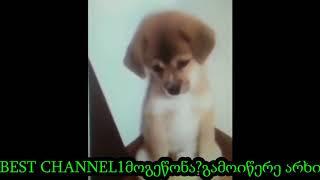 ძაღლი კუთხეში დააყენეს )))