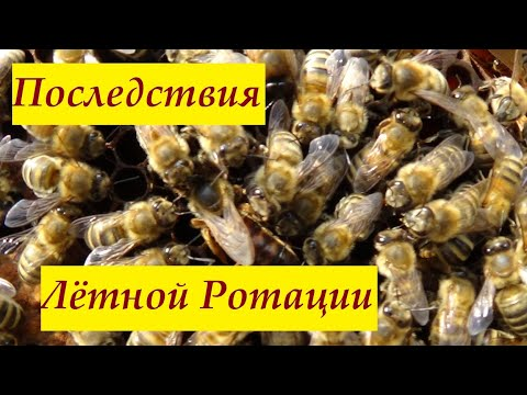 Состояние пчелиных семей после Лётной ротации