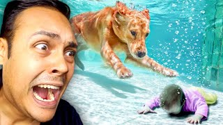 WHEN ANIMALS BECOME REAL LIFE HEROES