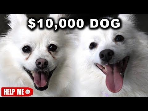 Pes za dolar a za 10 000 dolarů
