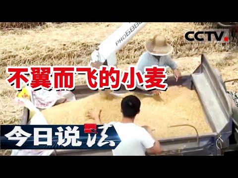 《今日说法》数百吨的粮食 为何不翼而飞 事实真的是这样吗? 20210809| CCTV今日说法频道