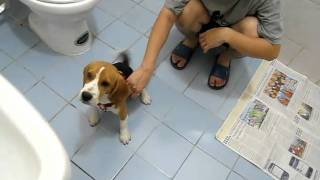 Our family beagle :D ... and my dorky bro - Video Youtube