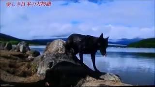 愛しき日本犬物語