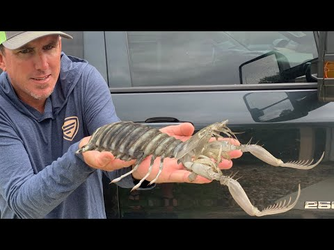 GIANT MANTIS SHRIMP – {CATCH, CLEAN, COOK}