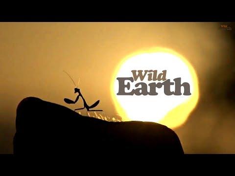 WildEarth -Sunset Safari - February 18, 2020