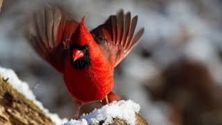 Relax Your Cat With Sunday Winter Birds And Squirrels - 12 Hours - Videos For Pets To Watch