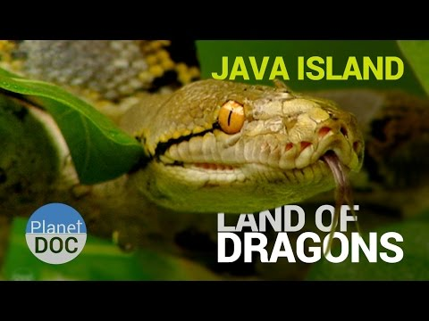 Java Island  [Indonesia]. Land Of Dragons | Nature - Planet Doc Full Documentaries