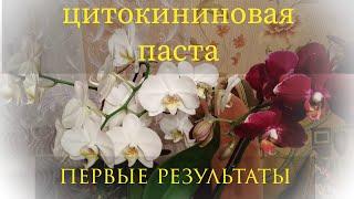 Фаленопсисы/цитокининовая паста/ как вырастить детку орхидеи