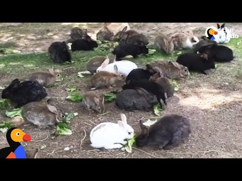 Abandoned Bunnies Dumped in Field Rescued by Woman in Las Vegas | The Dodo
