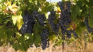 Farrell Wines