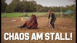 [XL-FMA] Stall I Pferde Pflegen I Bodenarbeit I Zaun Reparieren I Hufrehe  I Pferdefütterun