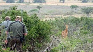 Jagt i Sydafrika 2017