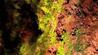 Яскравий острів Тенеріфе, Канарські острови.
