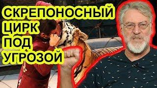 Чем цирк Дю Солей лучше цирка Запашных / Артемий Троицкий