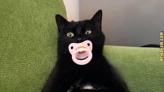 Приколы с кошками и котами топ. новое 2018.  Подборка смешных и интересных видео с котиками и