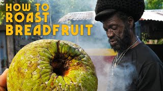 How to Roast Breadfruit! (and tasting the strongest Roots Tonic EVER)