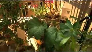 Día de la Fascinación por las Plantas 2013 Canal 2