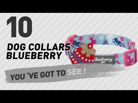 Dog Collars Blueberry // Top 10 Most Popular