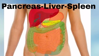 Pancreas -Liver- Spleen- Organs of the Human Body