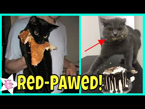 Times Pets Were Caught Red-Handed