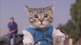Приколы с котами ржака до слез