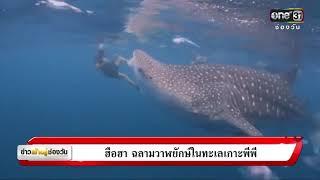 ฮือฮา ฉลามวาฬยักษ์ในทะเลเกาะพีพี   ข่าวช่องวัน   one31
