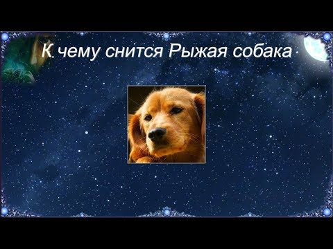 К чему снится Рыжая собака (Сонник)
