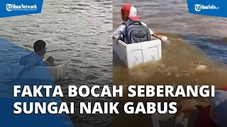 Fakta Video Bocah yang Seberangi Sungai Naik Styrofoam, Ternyata Bukan akan Berangkat Sekolah